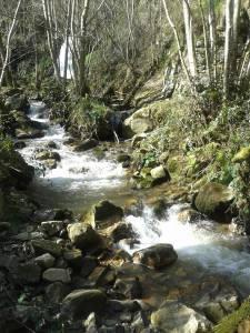 Cascada Nonaya